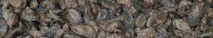 Duxbury Oysters, Island Creek Oysters, Farm to Table, Fresh Oysters, Raw Bar, Raw Bars, Duxbury Oyster Company, Duxbury Raw Bars, Duxbury Oyster Farm, Oyster, Shuckers