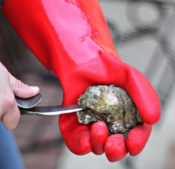 Duxbury Oysters, Duxbury, MA, Duxbury Bridge, Powder Point Bridge,McCluskey, Island Creek Oysters, Farm to Table, Fresh Oysters, Raw Bar, Raw Bars, Duxbury Oyster Company, Duxbury Raw Bars, Duxbury Oyster Farm, Oyster, Shuckers